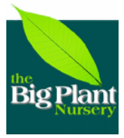 Logo The Big Plant Nursery