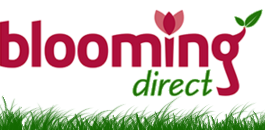 Logo Blooming Direct