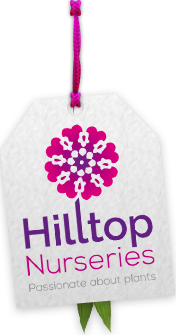 Logo tuincentrum Hilltop Nurseries