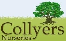 Logo tuincentrum Collyer's Nurseries