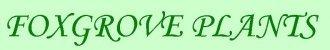 Logo Foxgrove Plants