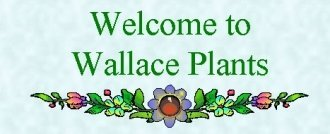 Logo tuincentrum Wallace Plants