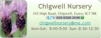 Logo tuincentrum Chigwell Nursery